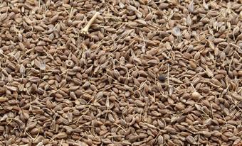 Anís en Grano Sancho - Productos - Anís Marrón 1% Impurezas