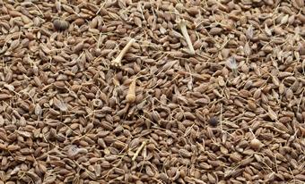 Anís en Grano Sancho - Productos - Anís Marrón 2% Impurezas